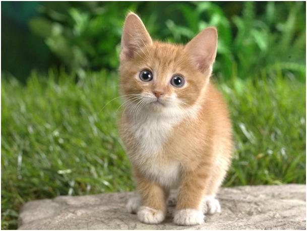 Jaj - de cuki! A kis édes.