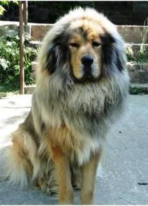 A mi Athos nevű kan kutyánk