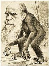 Darwin mint majom (korabeli gúnyrajz)